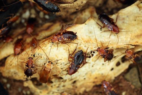 Se débarrasser des blattes