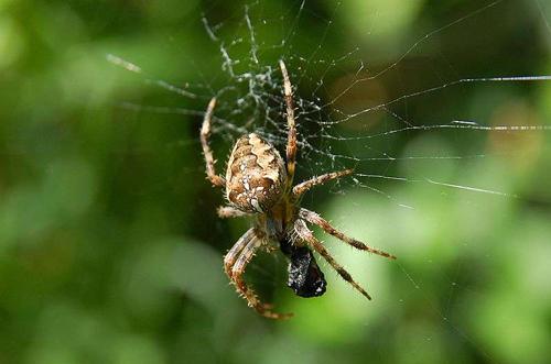 Se débarrasser des araignées