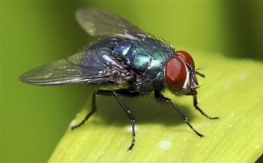 Se débarrasser des mouches et moucherons